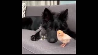 CUTE TRIANGLE ANIMAL FRIENDSHIP