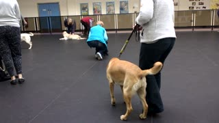 Guide Dog, Puppy Training