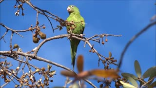 Hear the parrot's voice, in fact Very amazing