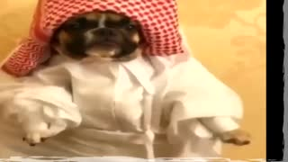 Funny Animals, just cute!