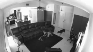 Pups Caught Cuddling