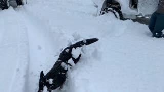 Dog Leaps into Unexpectedly Deep Snow