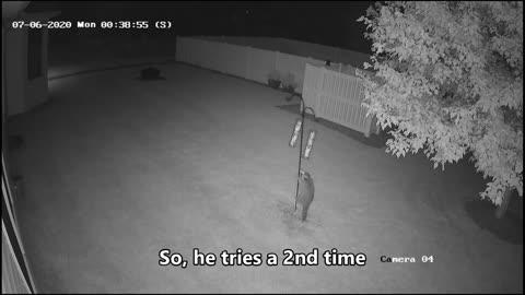 Raccoon at Bird Feeder