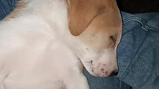 What a sleeping style of my dog puppy