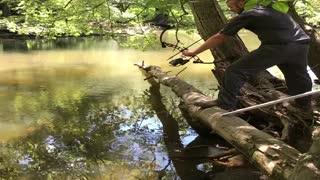 Arrow Ricochets off Log in Close Call