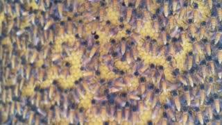 Enormous Honeycomb Hanging in Bangkok