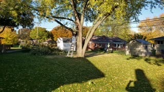 Drunk Neighbor Falls Down Cutting Limb Off Tree
