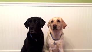 Dogs reaction when watching a tennis match melt your heart