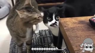 Funny Video | Funny cat Video