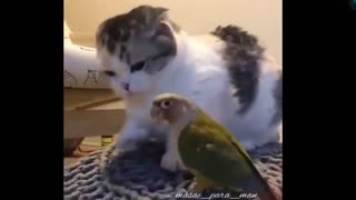 Feisty parrot plays with cat
