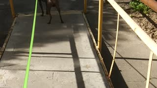 going for a walk with my dog