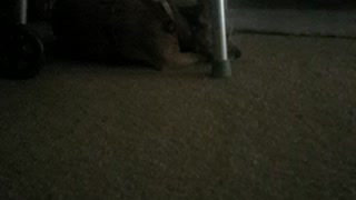 My very cute dog
