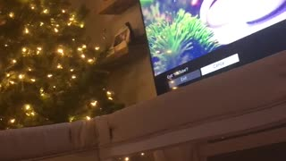 Sweet baby sleeping soundly to Christmas tunes