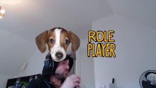 sometimes i dress up my dog