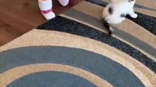 adorable baby plays with kitten