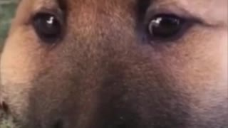 The dog steals honey and the bitter end