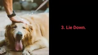What Every Dog Should Know In The Course Of Training