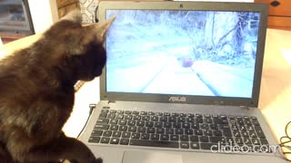 Cat trying to catch birds on video