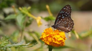 Yellow flower butterfly