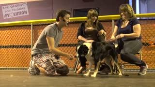 Dog Training/ Leash Training