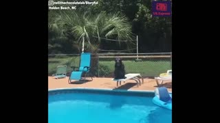 Dog nails expert dive on count of three