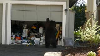 Bear Opens Garage Door