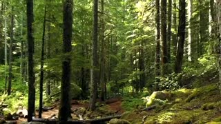 The beauty of the nature of the forest and tall trees