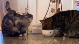 Gatinhos dividindo o pote de comida
