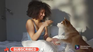 Dogs More Loyal Than Human | Dog Lovers | Dog Videos | Love for Dog | Cute Dogs | Pet Lovers