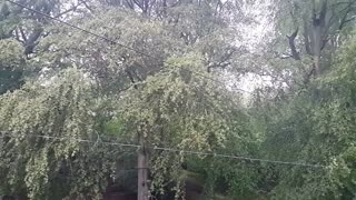 Relax Library: Video 12. Rain in the forest. Relaxing videos and sounds