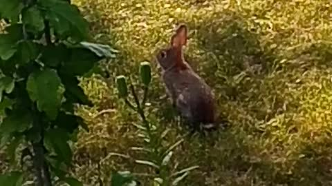 Bunnies every where
