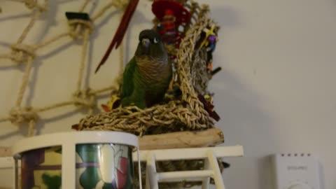 Parrot Dances to Cardi B Rap Music