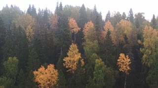 Drone Footage of a Forest - Relaxation Music