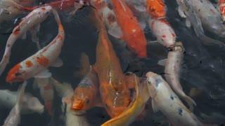 See colorful aquarium fish1. Really beautiful
