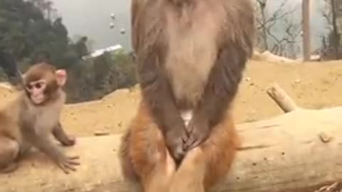 Best Funny animal