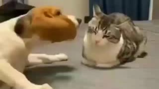 Dog play with cats
