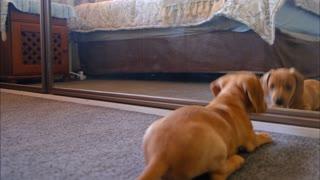 Puppy Finds A New Friend