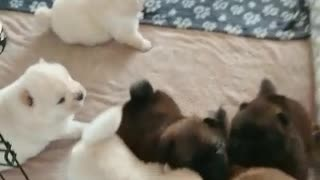 Litter of happy puppies squeal in excitement