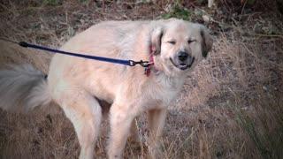 Hilarious Dog Smile