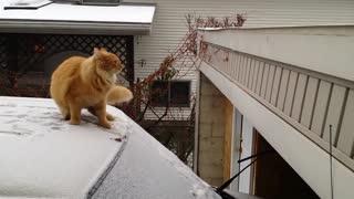 CAT JUMPING FAILS