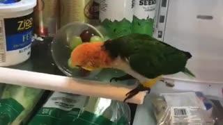Bird Throws Fruit From the Fridge