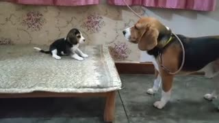 Deep conversation between father and daughter