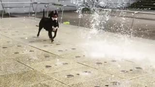 You'll never love anything as much as this pup loves water fountains
