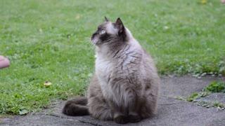 Cat cat c