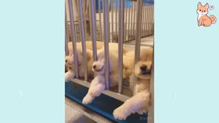 Cute puppies cute buddy