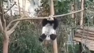 Fluffy acrobat