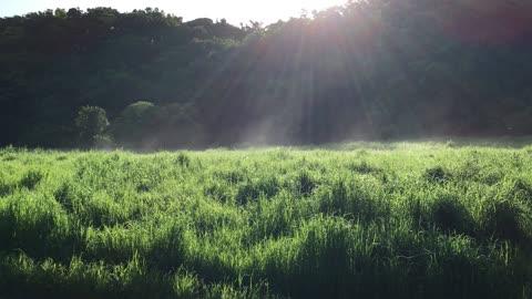 water vapor From steam grass