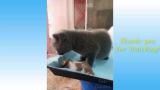 funny cat video series