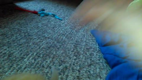 Cute Kitten Plays Under Blanket, Goes Cross-Eyed!!! LOL