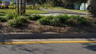 Trump 2020 flag drop Atlantic Beach, Florida, s